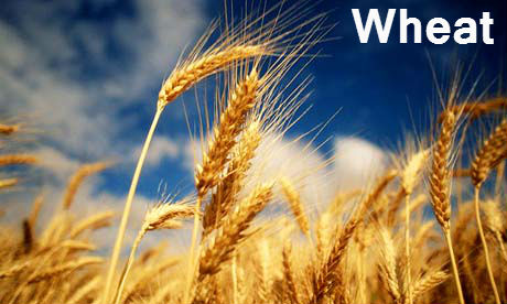 wheat-beautiful